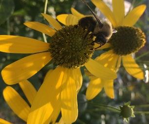 Bee Hotel / Pollinator Palace