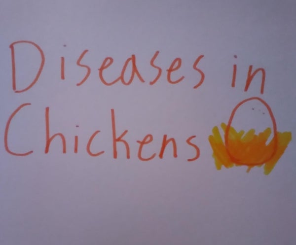 6 Common Diseases in Chickens