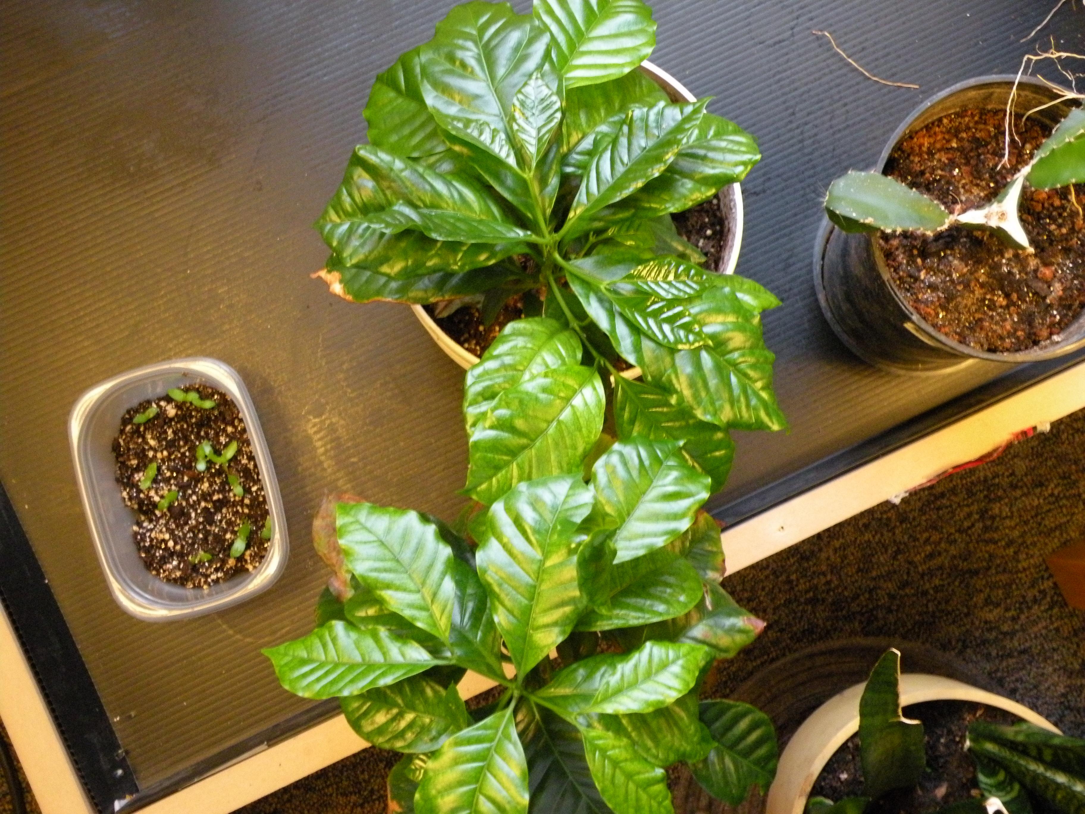 How to keep a house plant alive