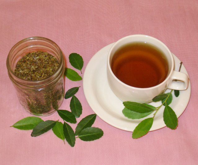 Harvest, Roast and Brew Green Tea using a Common Shrub