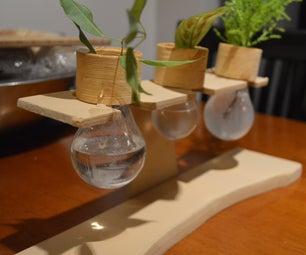 电灯泡窗台小植物