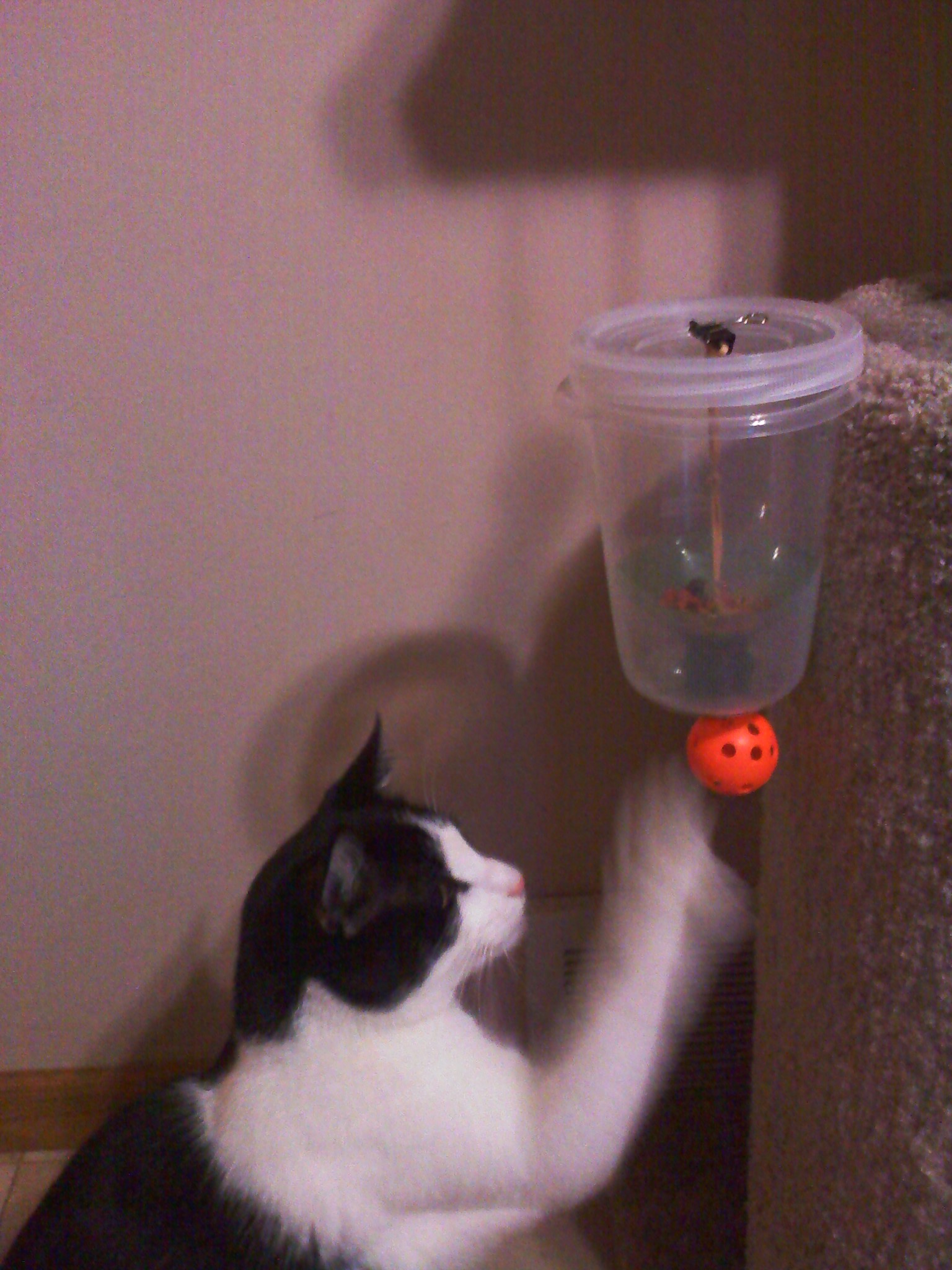 Cat Powered Auto Feeder