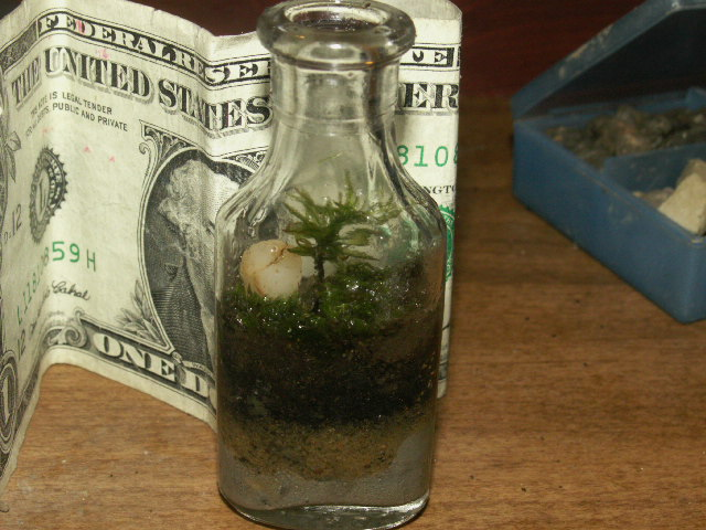 TEENY TINY TERRARIUMS
