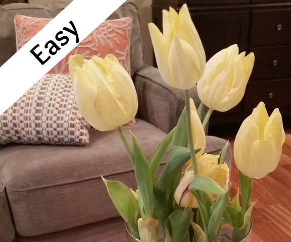 Full View Tulips