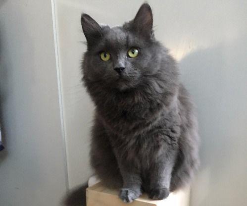 Solar Powered Cat Feeder (SPCF)