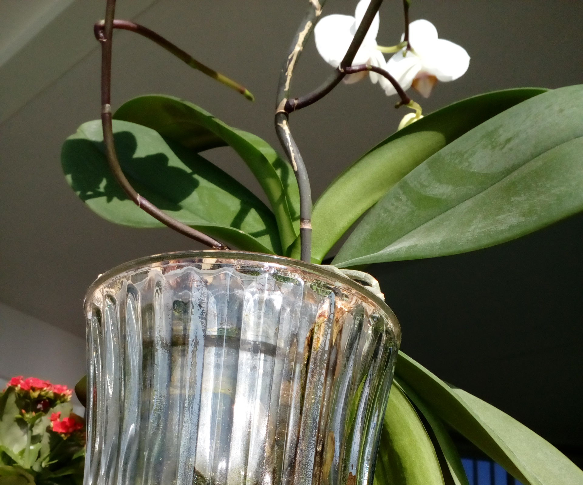 Orchid Hydroculture (or How to Water Your Phals Once a Year)