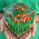 Clown Fish Diorama
