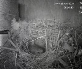 Bird Nest Cam
