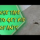 Life Hack - Get Rid of Ants With Tape