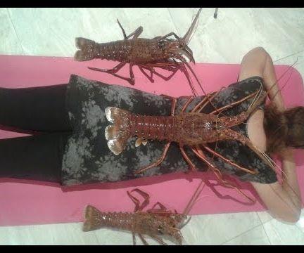 How to Catch Jumbo Crayfish Perth WA (Western Rock Lobster)