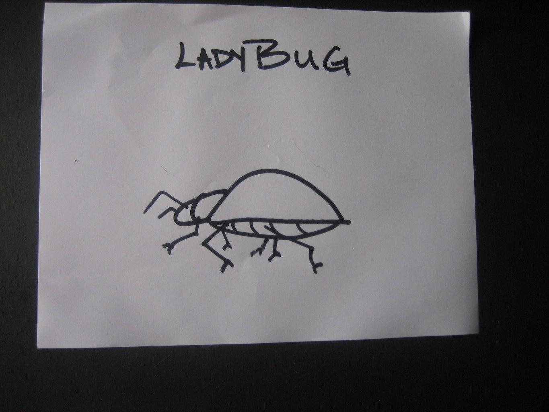 DRAW THE LADYBUG