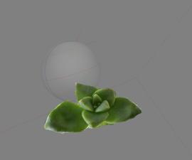 Succulent Photogrammetry + 3D Printing
