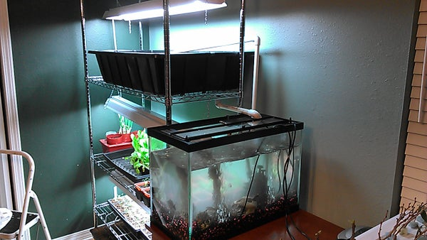 """Easy """"Shelf"""" Aquaponics With Bell Siphon"""