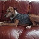 Quick, No Sew Denim Dog Vest
