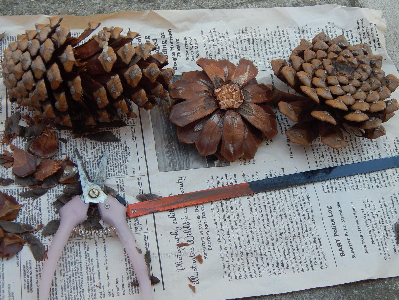 Pine Cone Flower - Violet