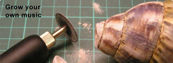 Grow Your Own Musical Instrument - an Environmentally-sustainable Conch-substitute.
