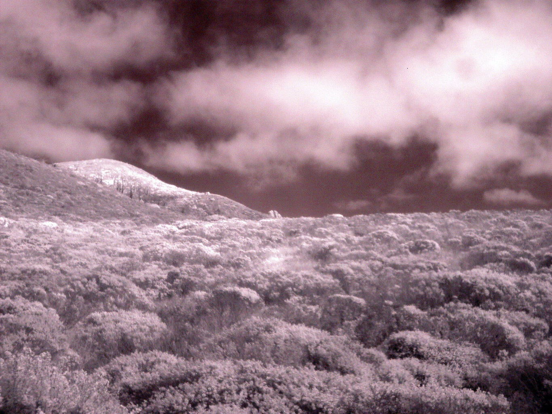 Infrared Digital Camera - the Real Way