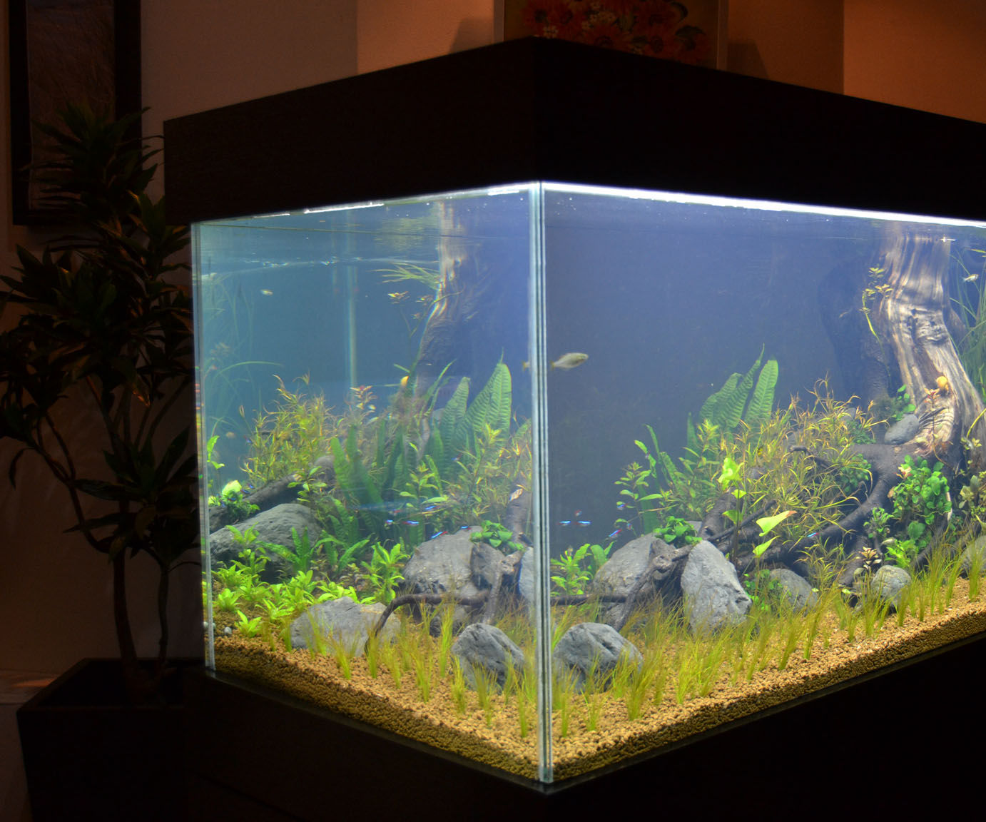 Build an aquarium that looks good on any living room