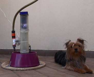 Drinking Dog - Dogs Watering and Spying System