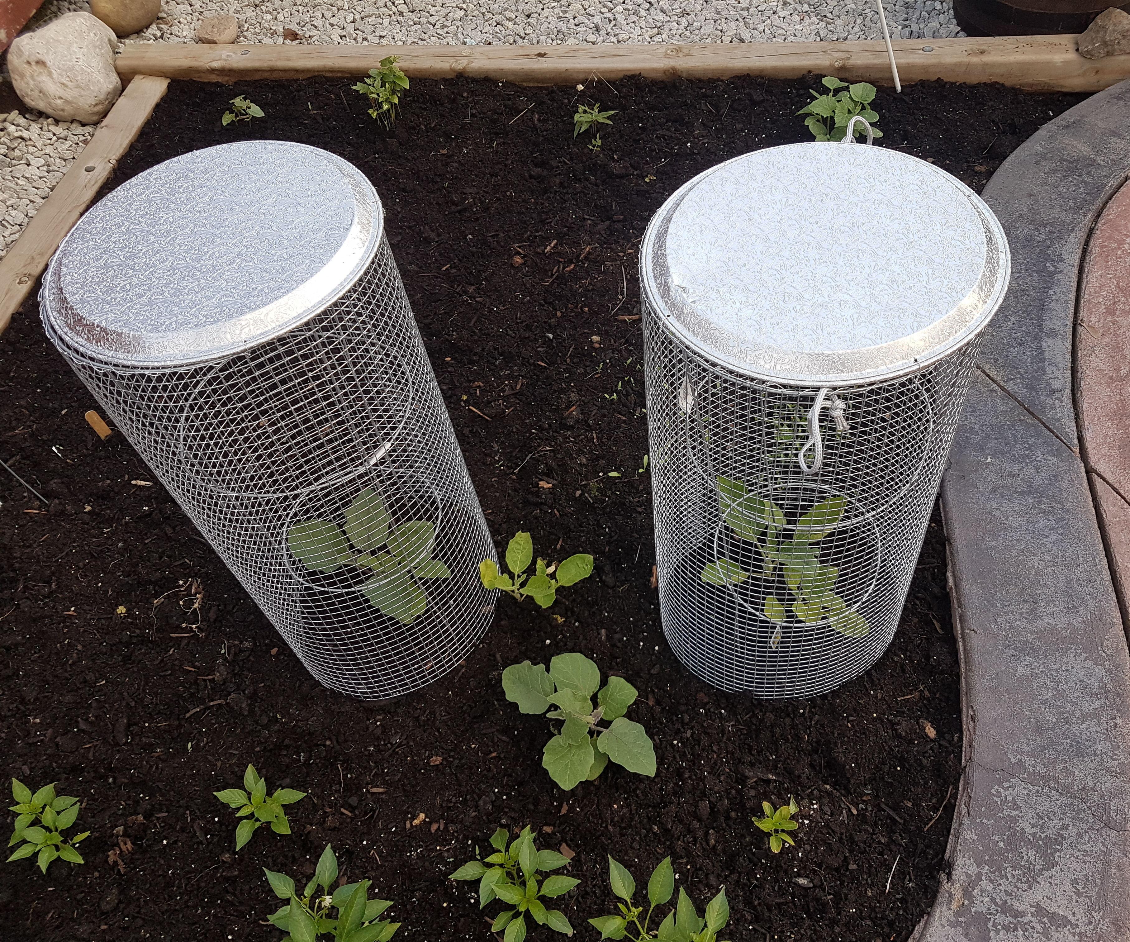 Vegetable / Fruit Plant Cage
