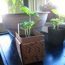 Coffee Sleeve Transplant Pots