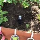 Really Easy Automatic Plant Waterer