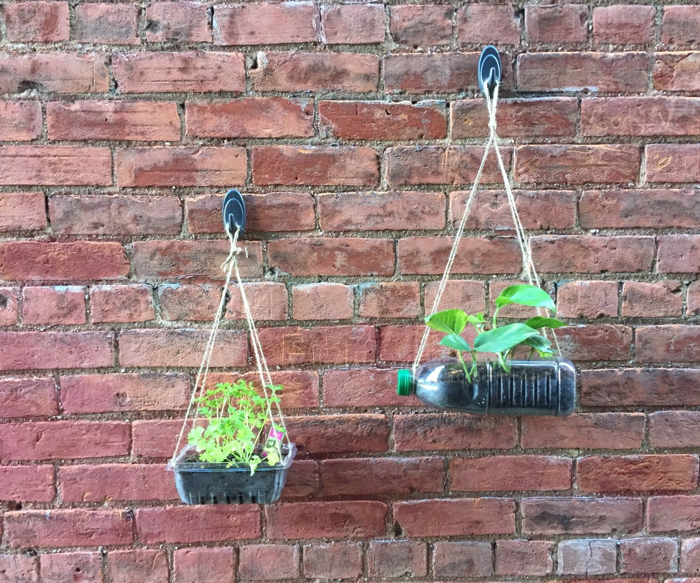 Recycled Vertical Gardens