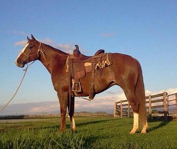Placing the Saddle Pad