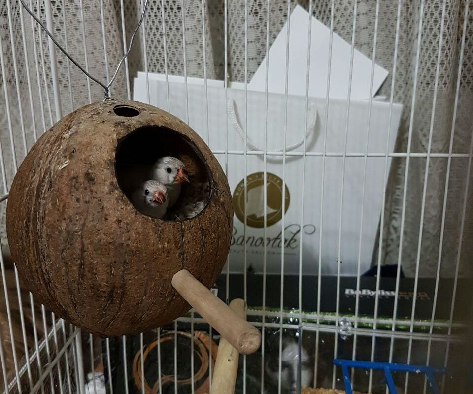 Finch House (Nest)