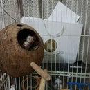 Finch nest (Birdhouse)