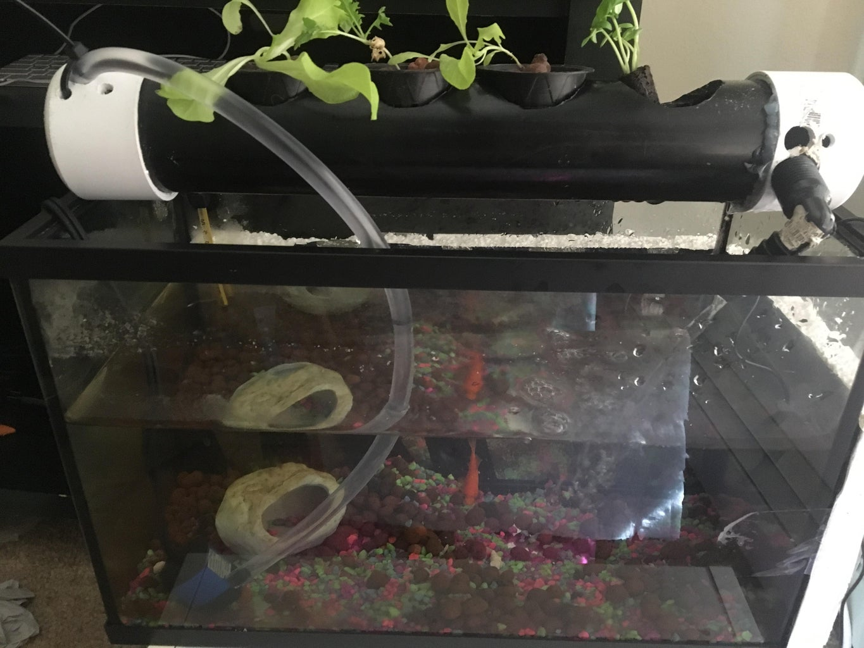 Aquaponics for 10 Gallon Fish Tank