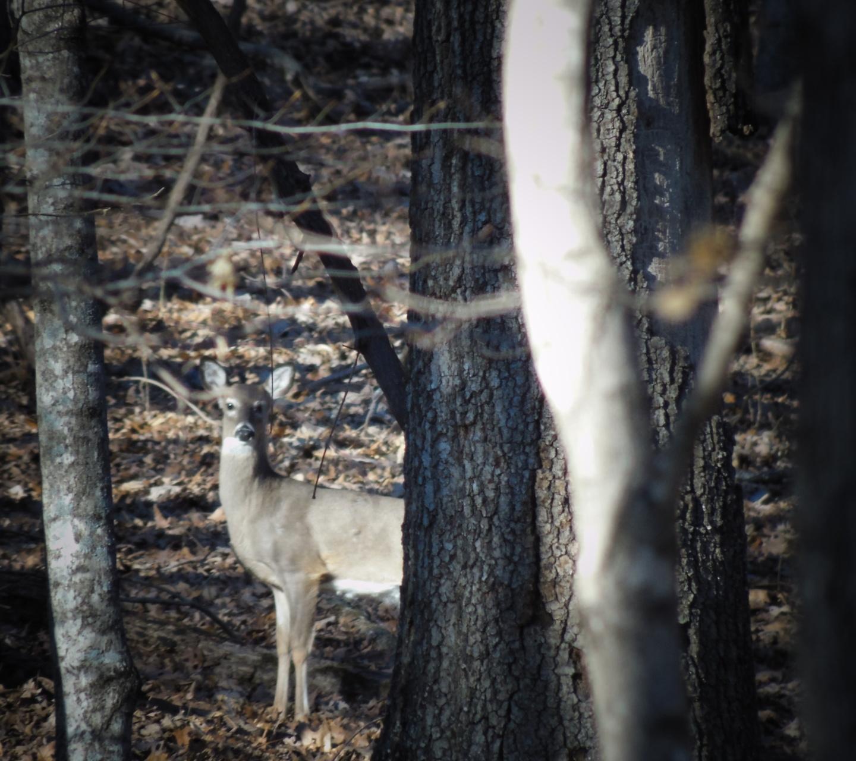 salt lick for deer hunting