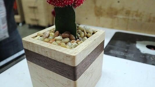 Adding Your Succulent!