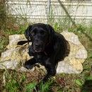 Dog Settle Mat