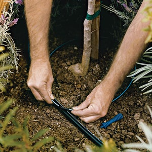 Lay Tubing Around Shrubs and Trees