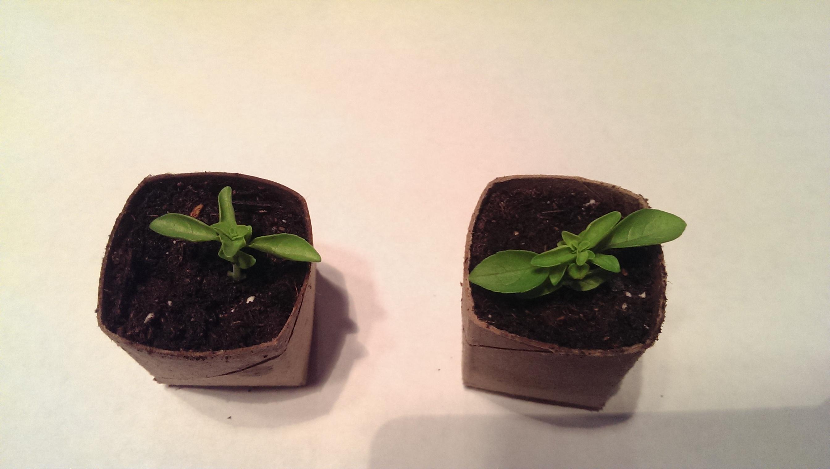 Biodegradable Toilet Paper Roll Seedling Pots