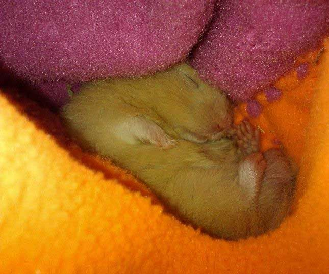 Handy Dandy Hamster Holder