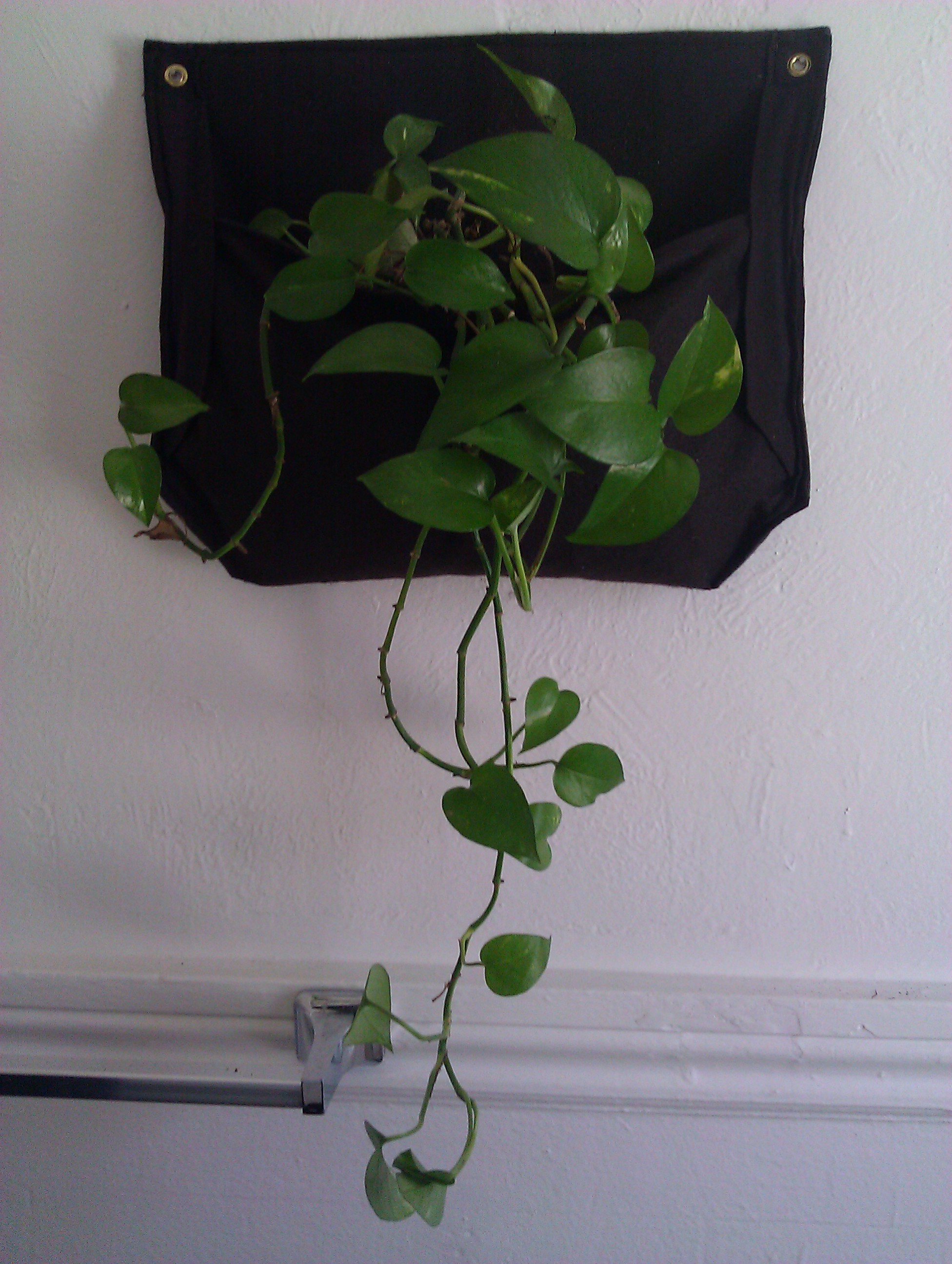 hanging plant pocket