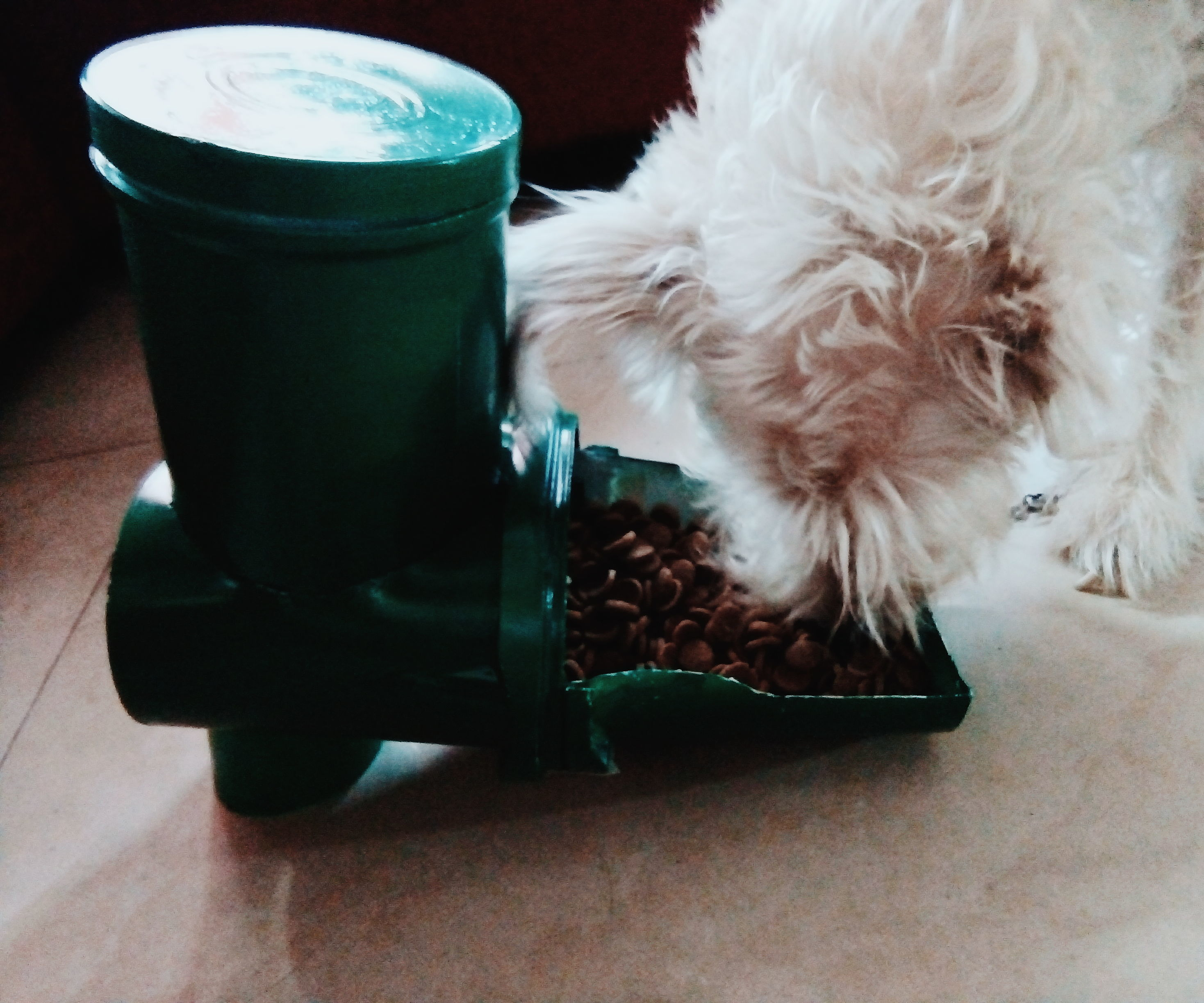 DIY Dog Food Dispenser