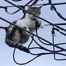 Electricity?