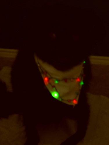 Light-Up Dog Bandana