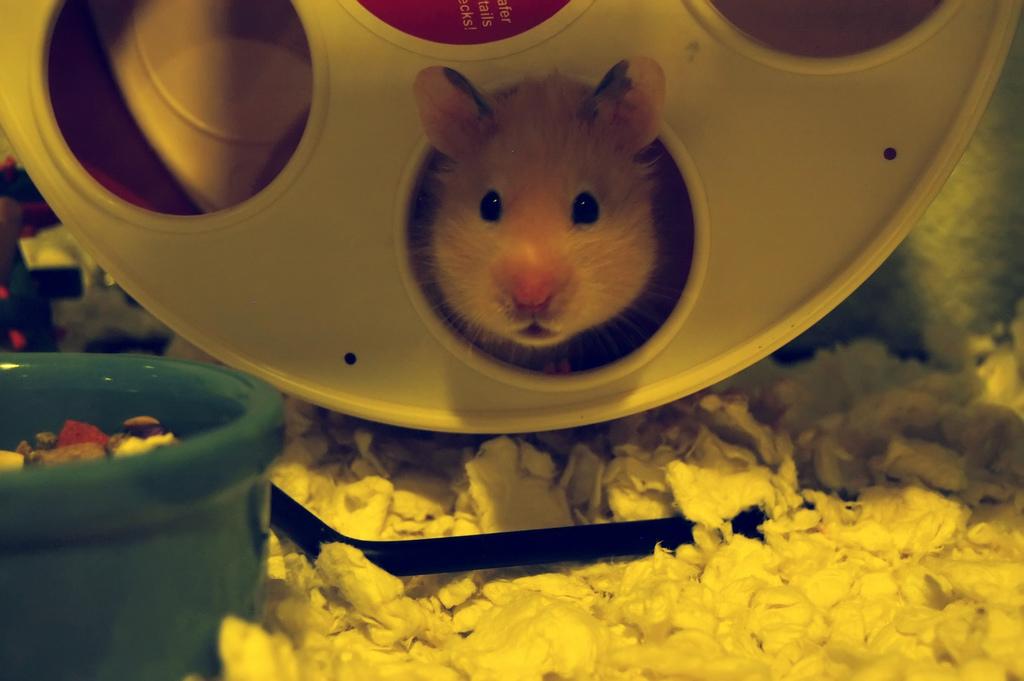 Track How Far Your Hamster Runs