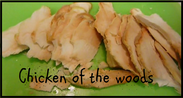 Cooking Chicken of the Woods: Laetiporus Sulphureus