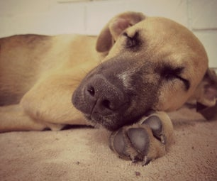 Sing Your Dog to Sleep!