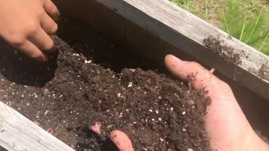 Soil Where We Found the Skinks Eggs