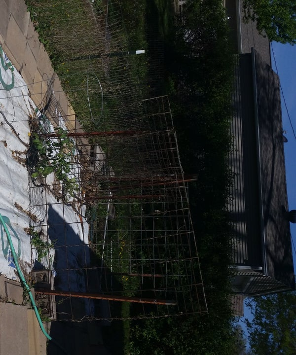 (Almost) Weed FREE Garden & Landscaping