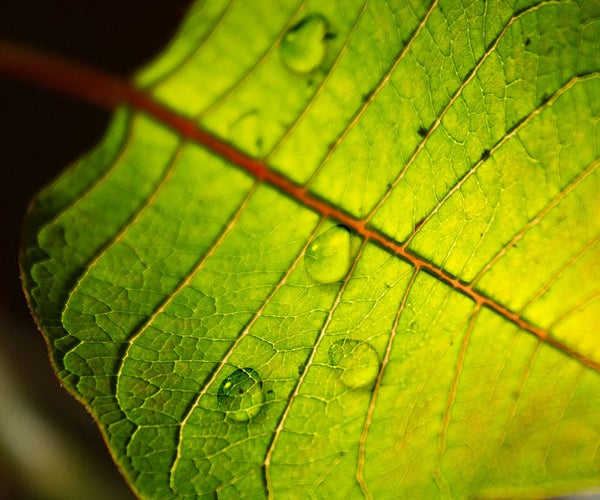 Create HD Rain Water Drops in Photoshop