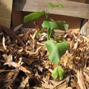 The Trash Garden (a Zero Cost, Easy Raised Bed)