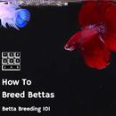 How to Breed Bettas: Betta Breeding 101