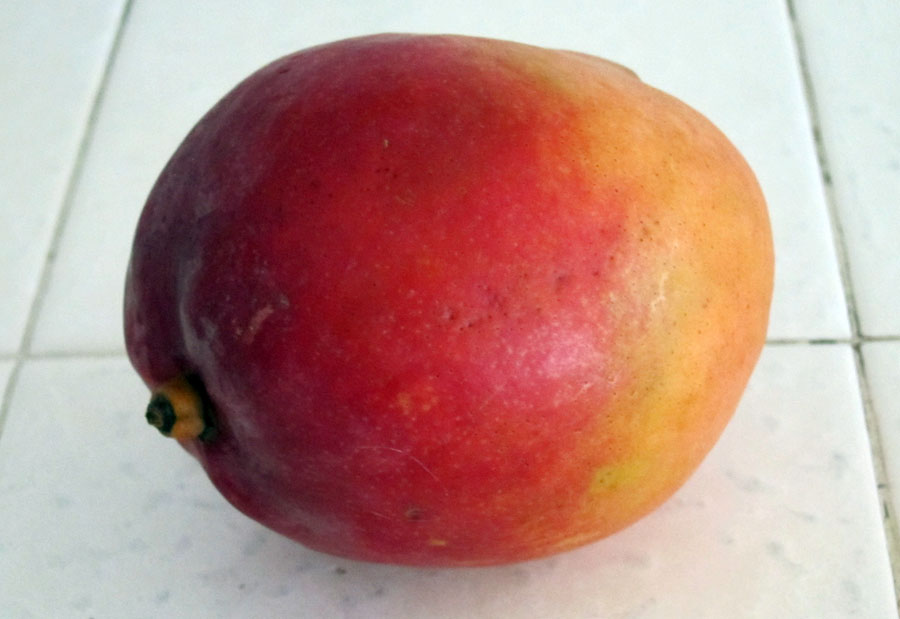Gardening from the grocery Store - MANGOS